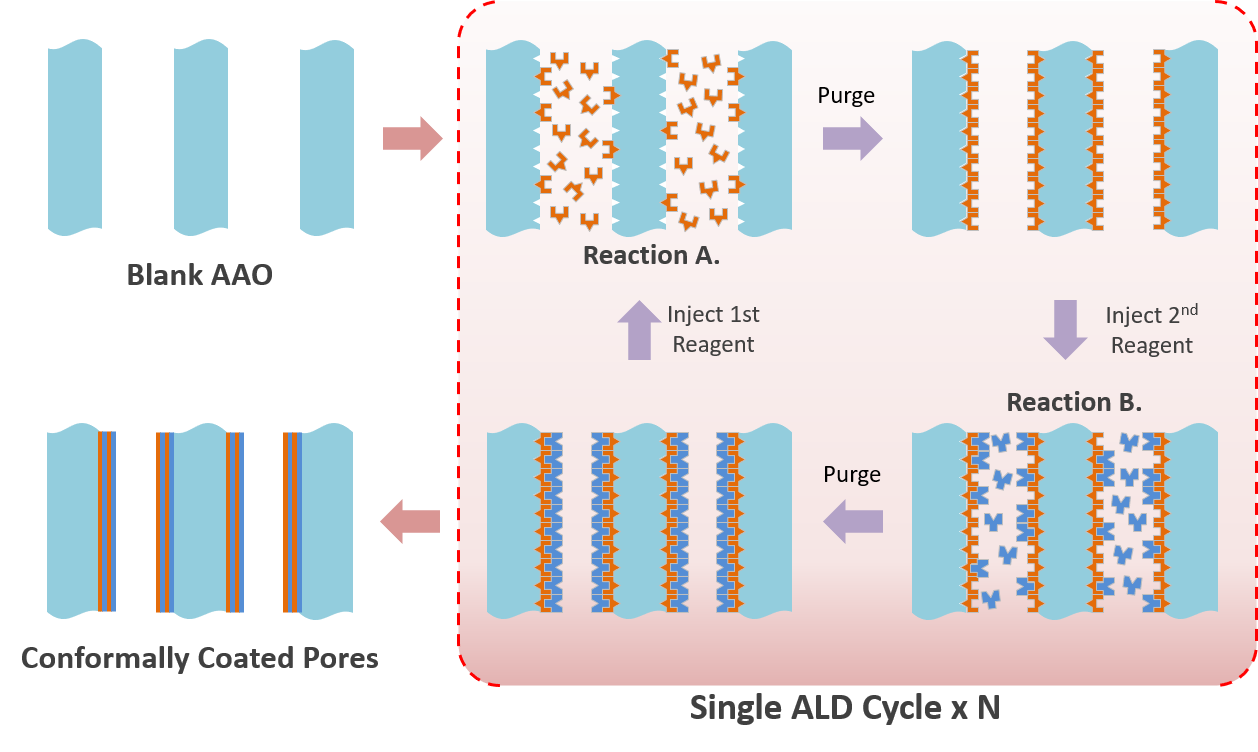 ALD process inside the pores of AAO
