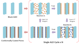 ALD process inside the pores of AAO