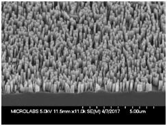 SEM side view of short Si nanowires